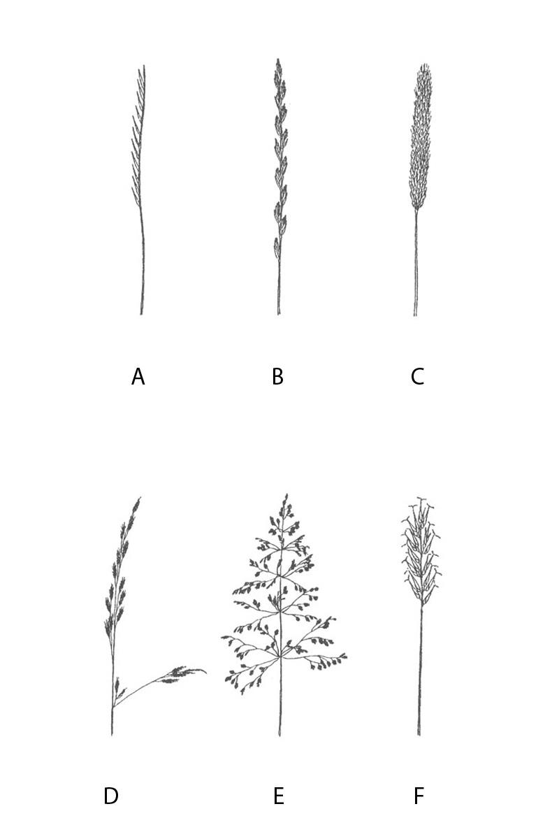 8 Květenství T1 a T2